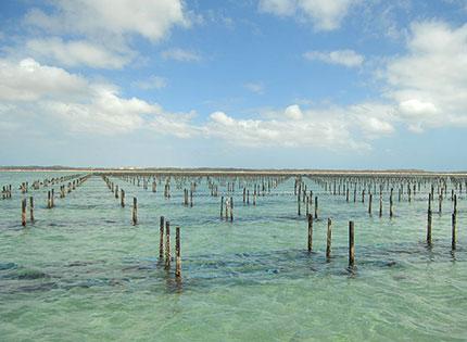 oyster-farm-south-australia.jpg